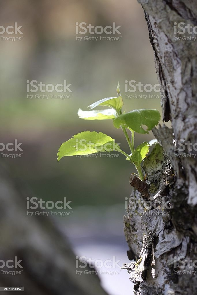Tree Sprout stock photo