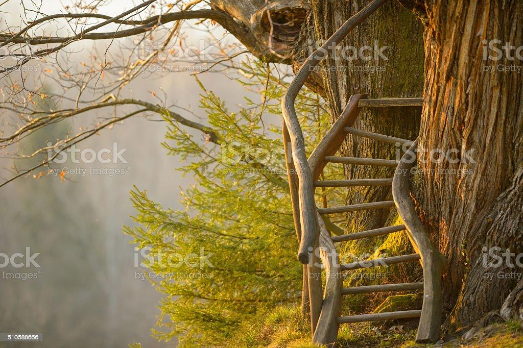 Tree staircase stock photo