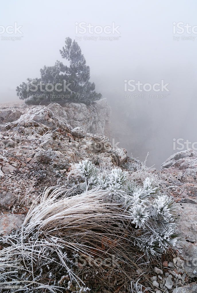 Tree standing in fog at the edge of a rock stock photo