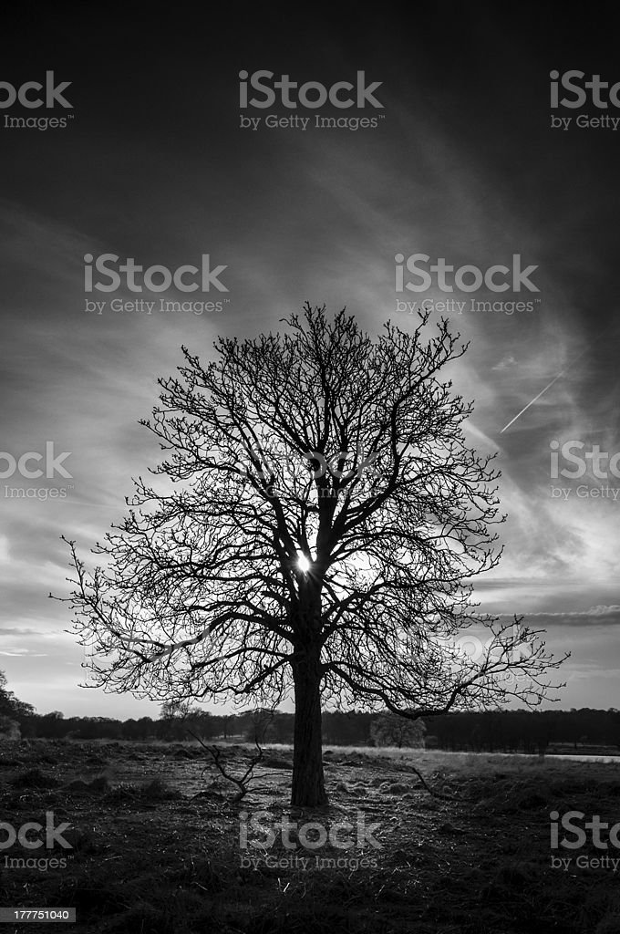 Tree standing inside Richmond Park stock photo