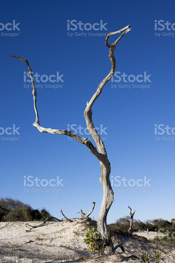 Tree Stands Alone royalty-free stock photo