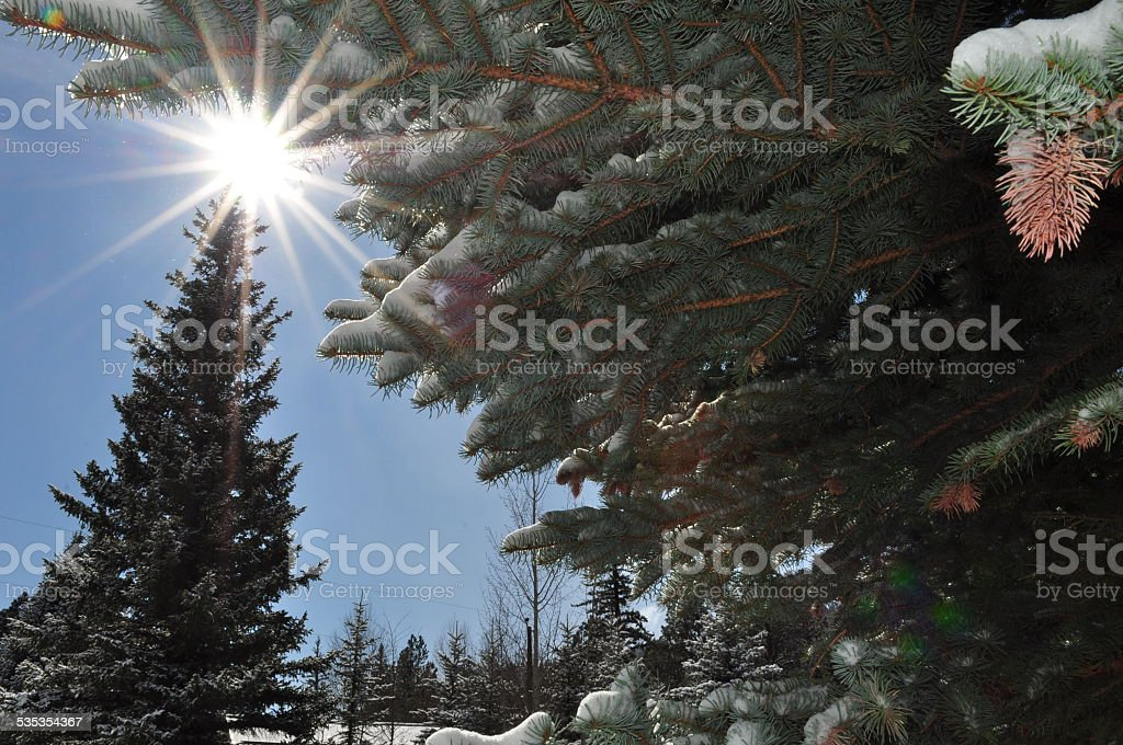 Tree star stock photo