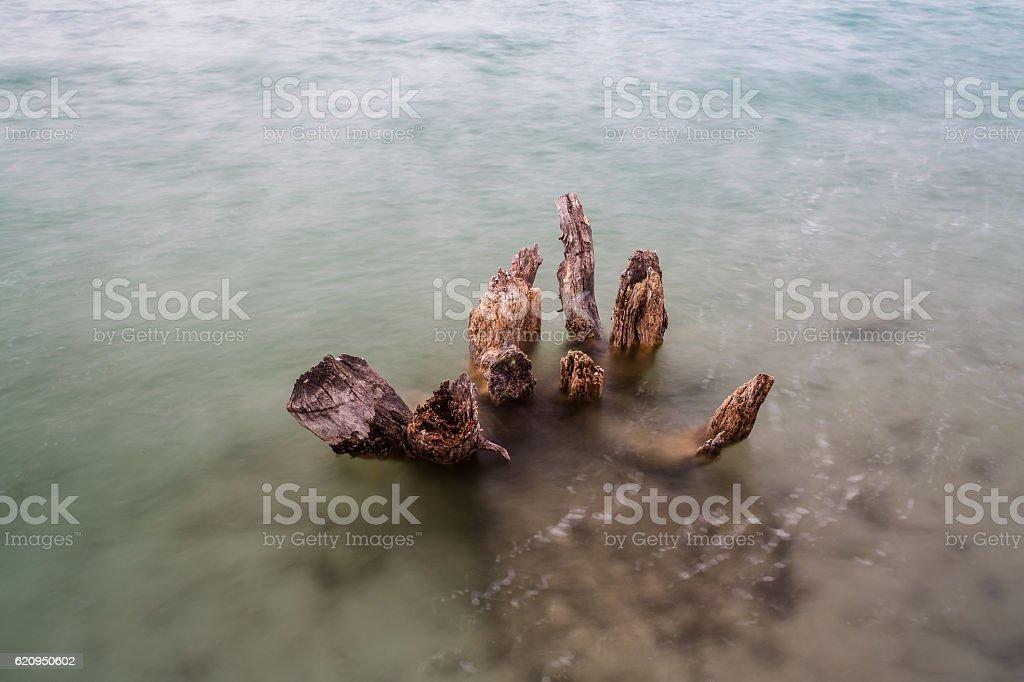 Tree stomp in water stock photo