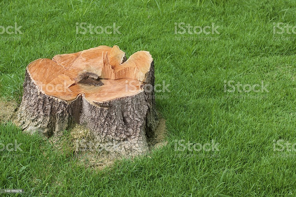 tree stump and green grass field stock photo