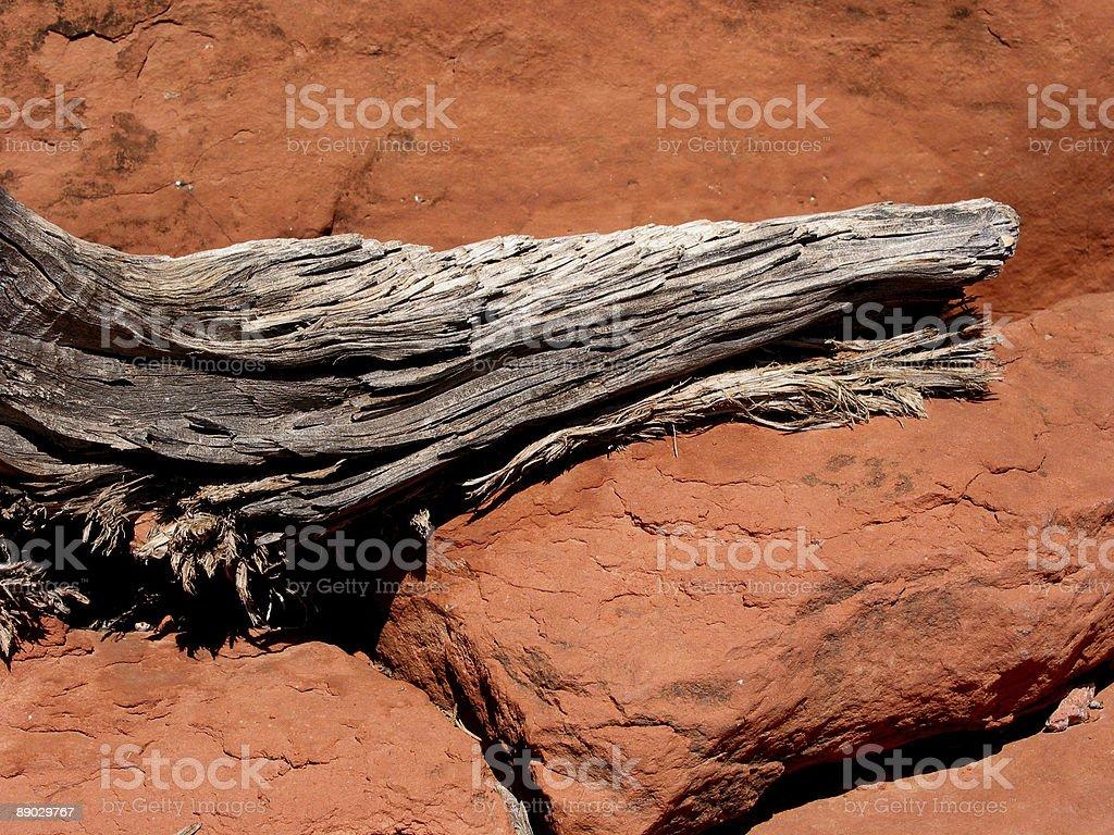 Tree Stump and Red Rocks, Sedona stock photo