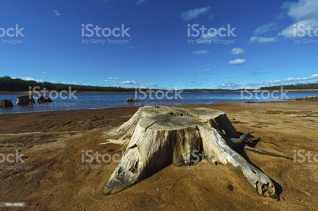 tree stump at dam in Australia royalty-free stock photo