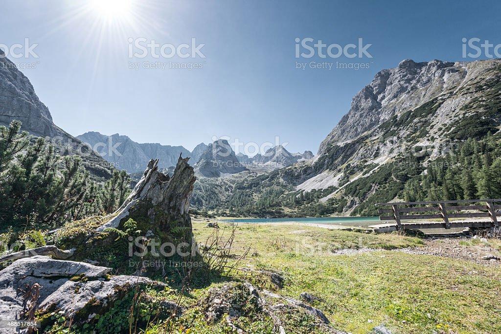 tree stump at mountain lake seebensee in alps of austria stock photo