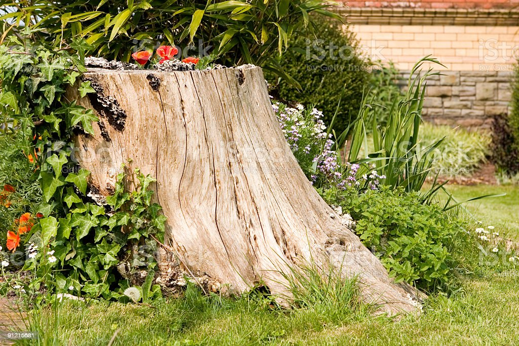tree stump garden feature with plants royalty-free stock photo