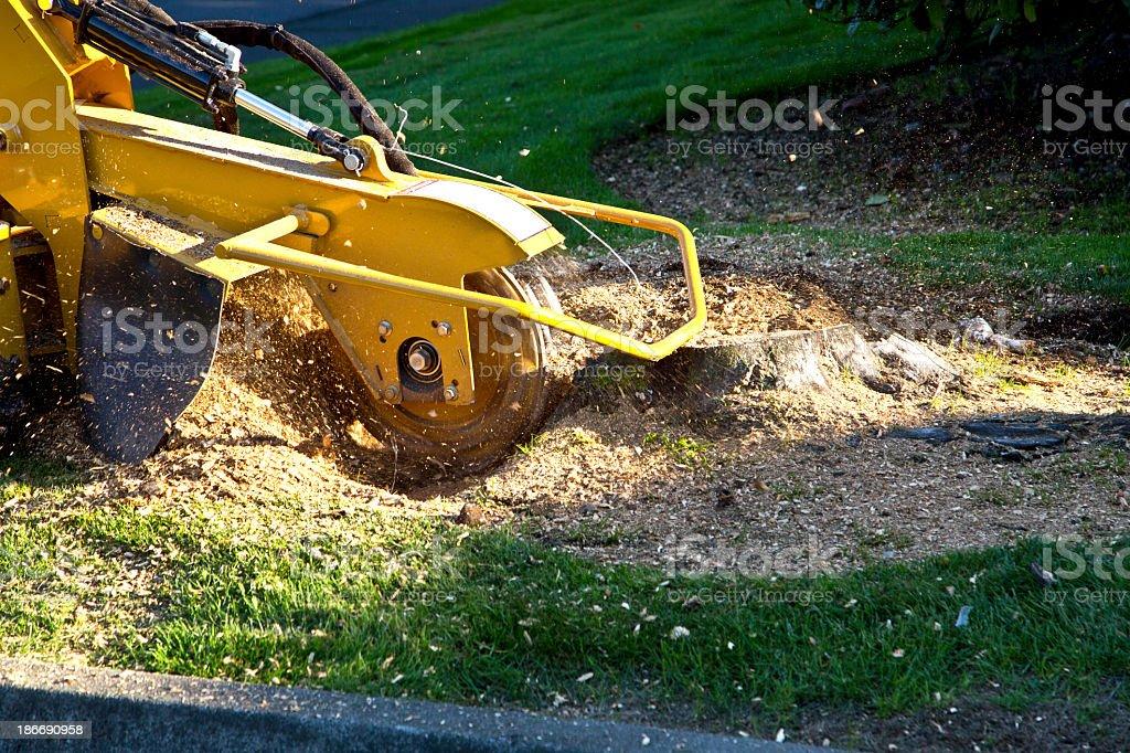 Tree Stump Grinding stock photo