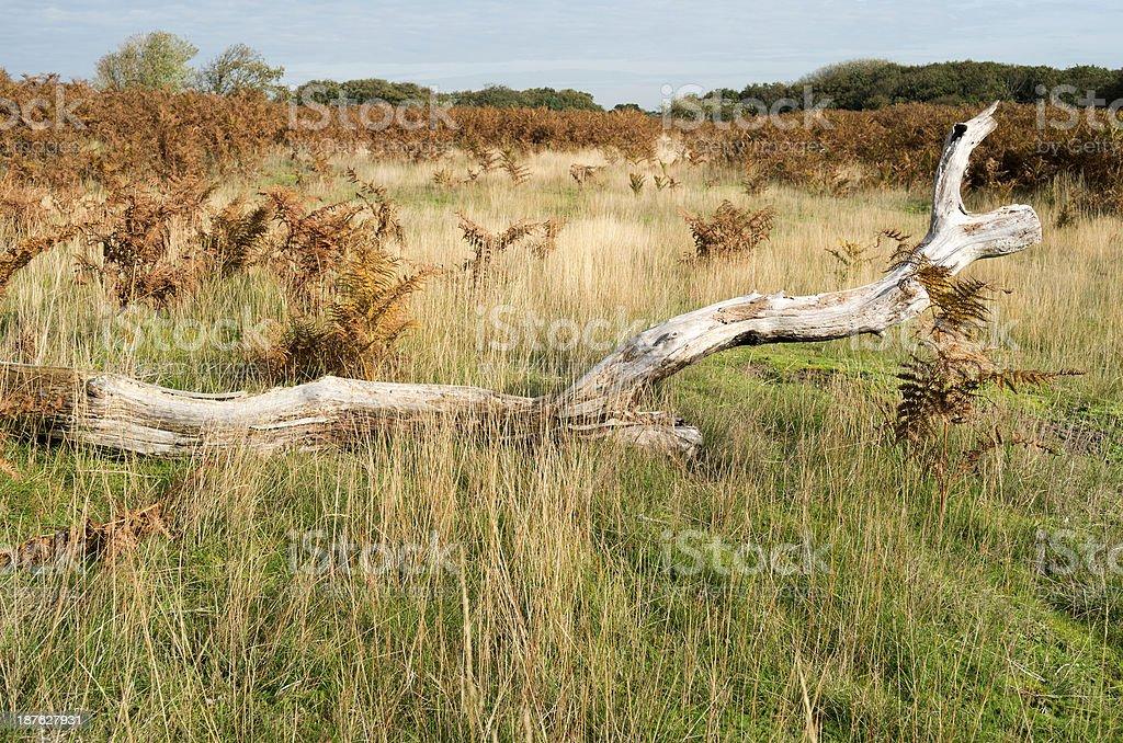 木の切り株で、砂丘の景観をお届けします。 ロイヤリティフリーストックフォト