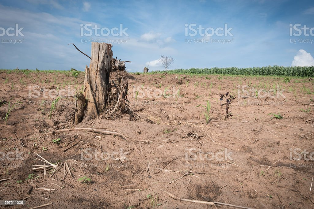 tree stump in deforested mountain hill. stock photo