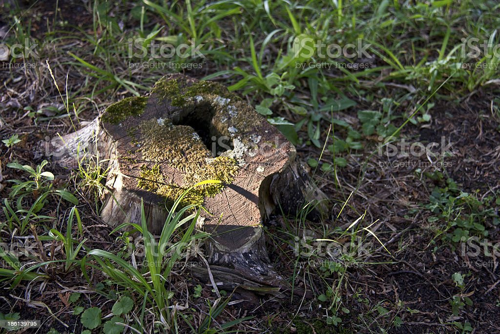 Tree Stump in the Ground royalty-free stock photo