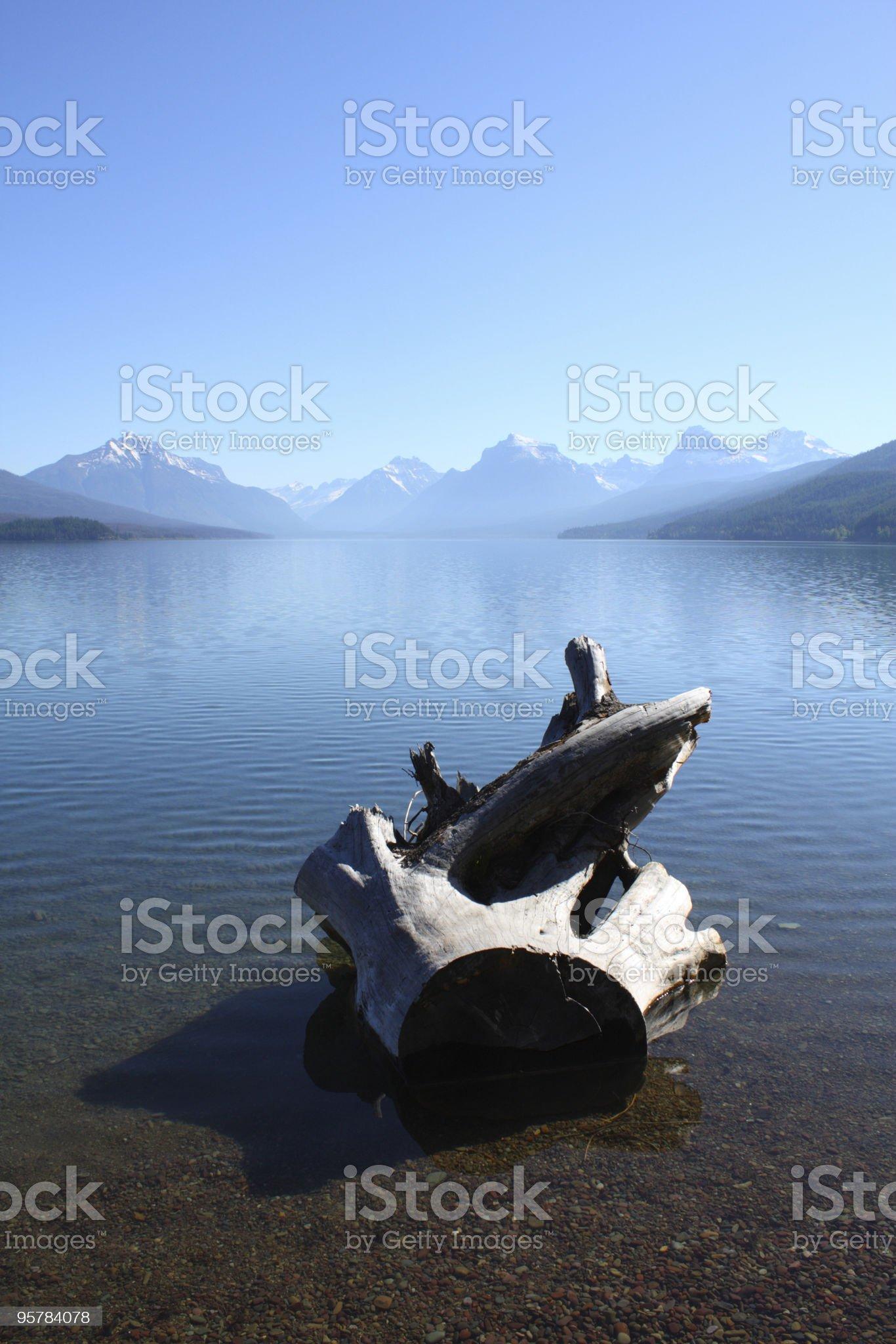 Tree Stump in Water at Mountain lake royalty-free stock photo