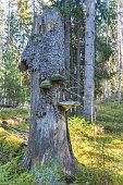 Tree stump in woods