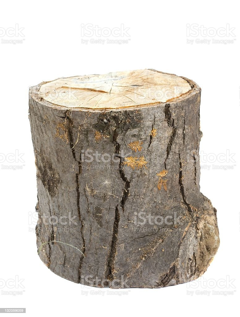 Tree stump on a white background stock photo