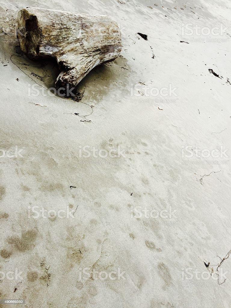 Tree stump on deserted beach royalty-free stock photo