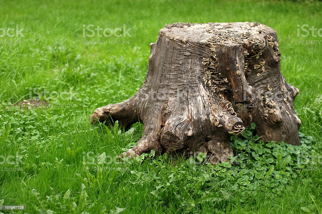 Tree stump on grass with copy space stock photo