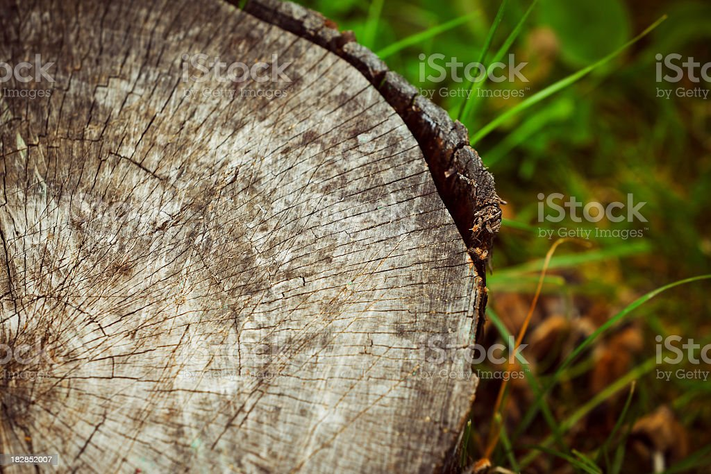 Tree stump royalty-free stock photo