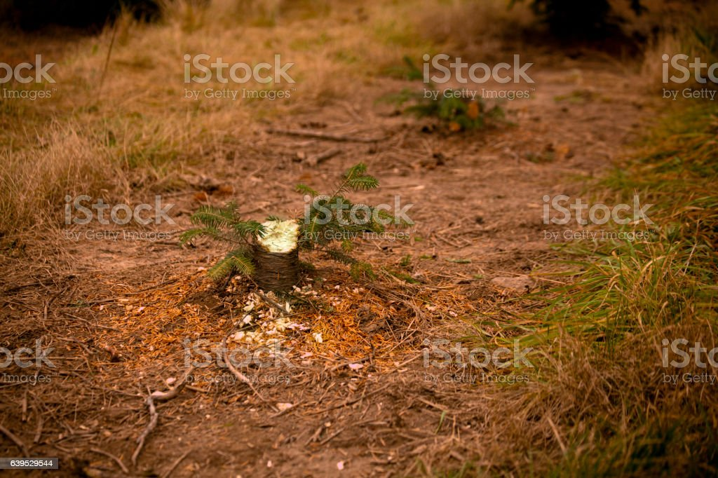 Tree Stump stock photo