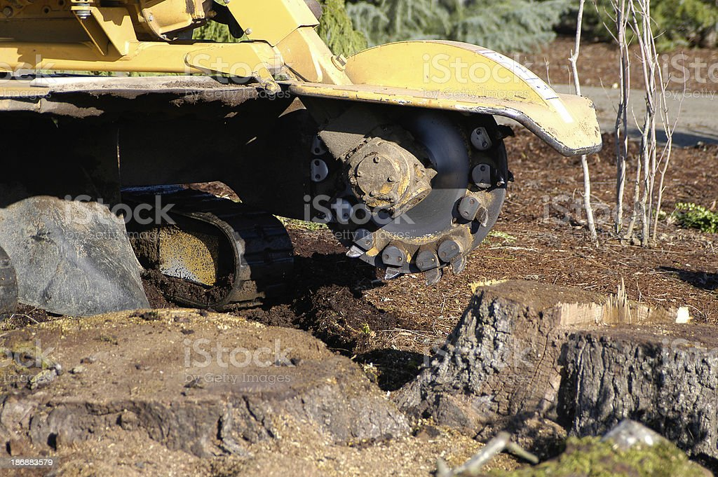 Tree Stump Removal stock photo