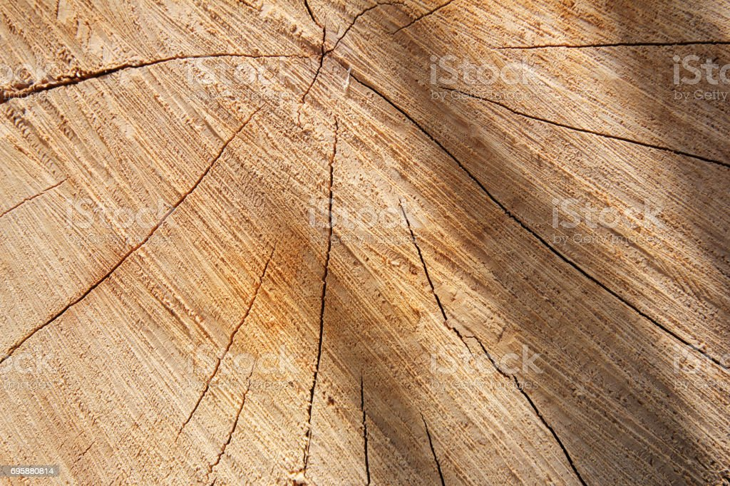 Tree stump, round cut with annual rings stock photo