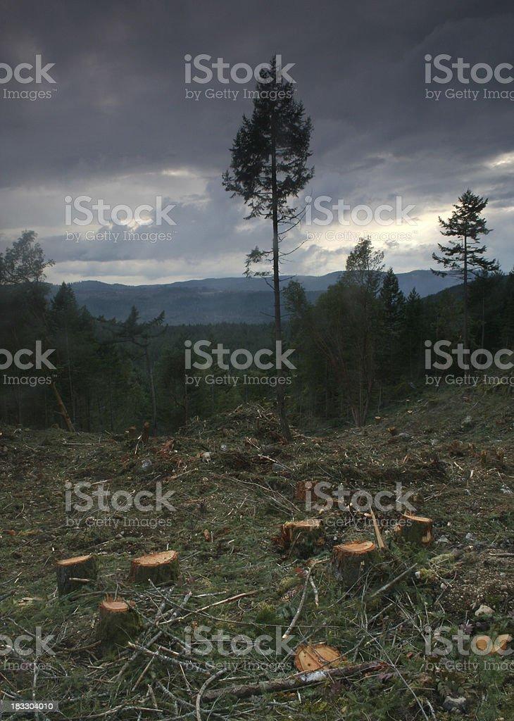Tree Stumps royalty-free stock photo