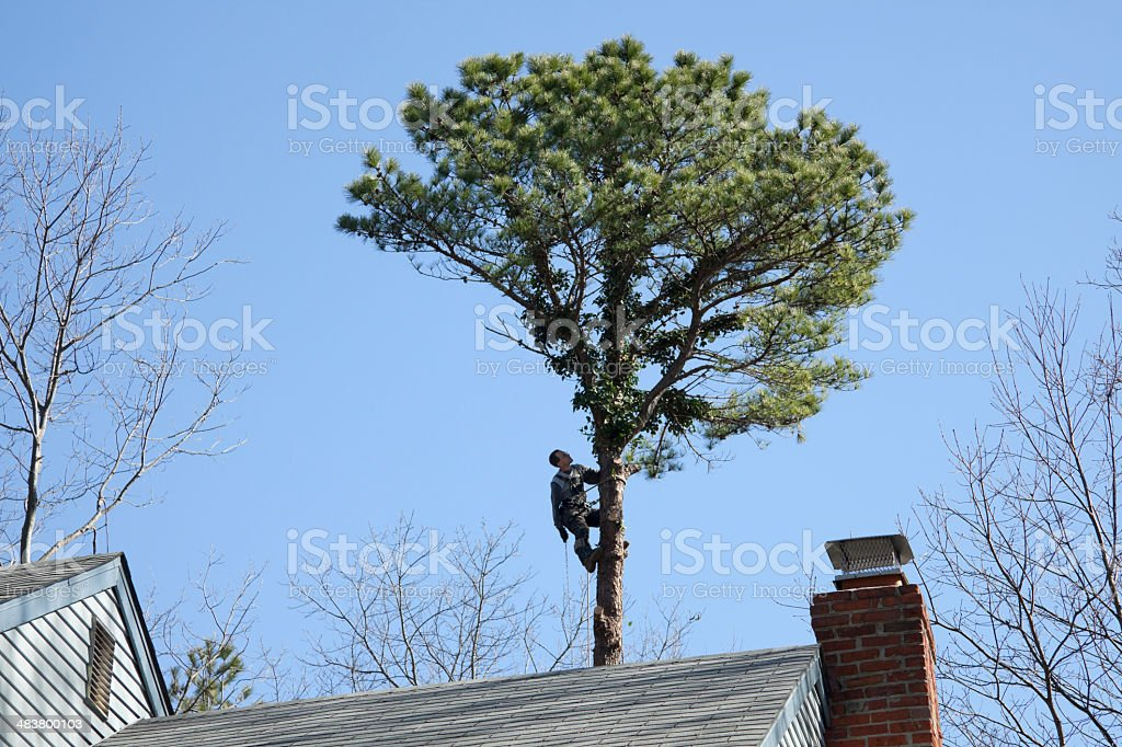 Tree Surgeon at Work royalty-free stock photo