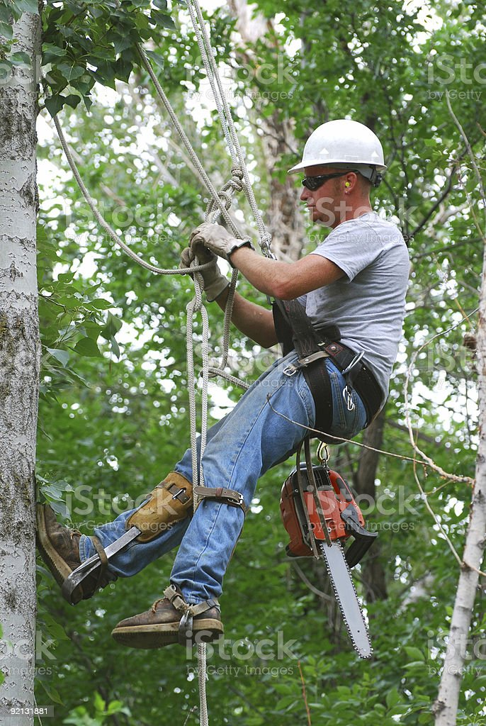 Tree surgeon cutting down a tree stock photo