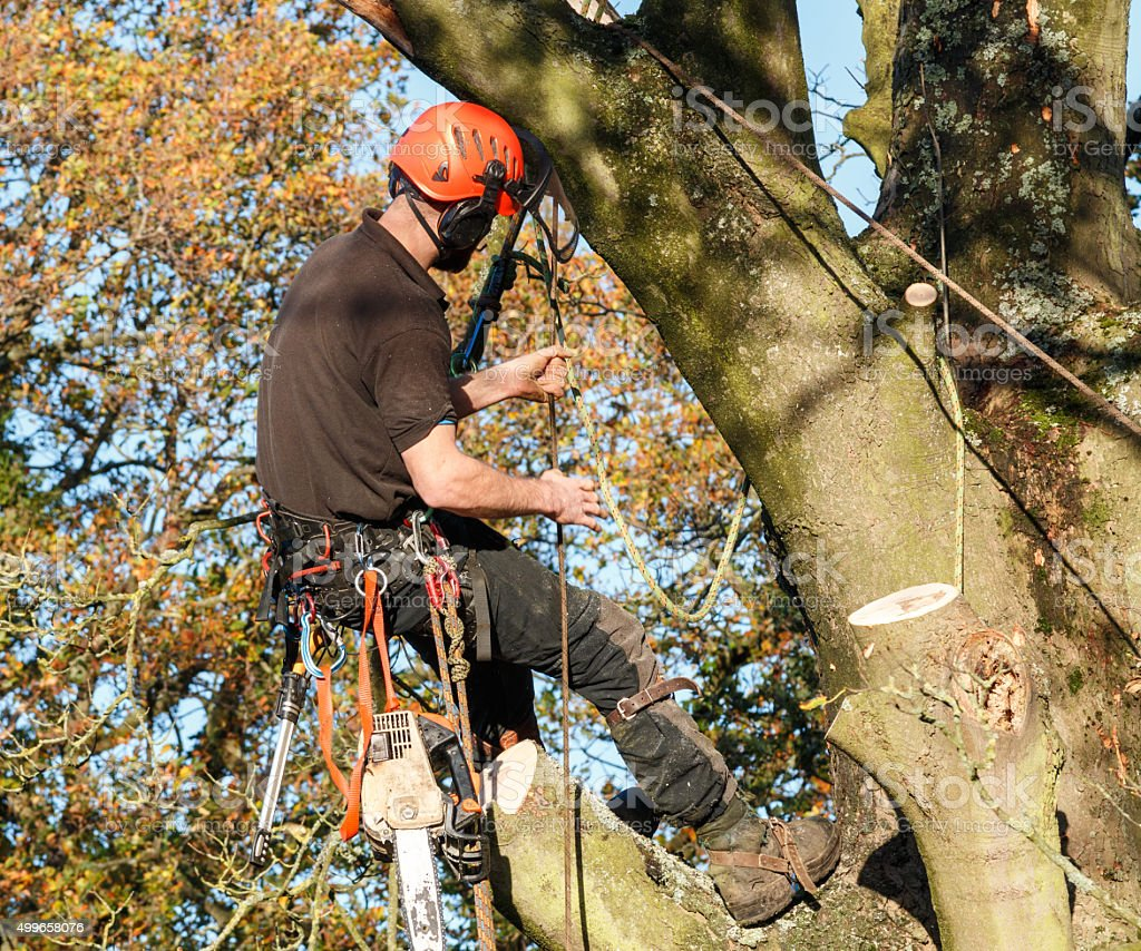 Tree surgeon hanging from a branch stock photo