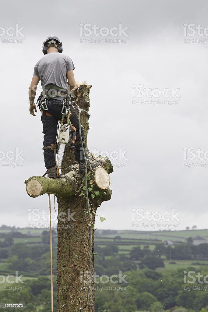 Tree Surgeon stock photo
