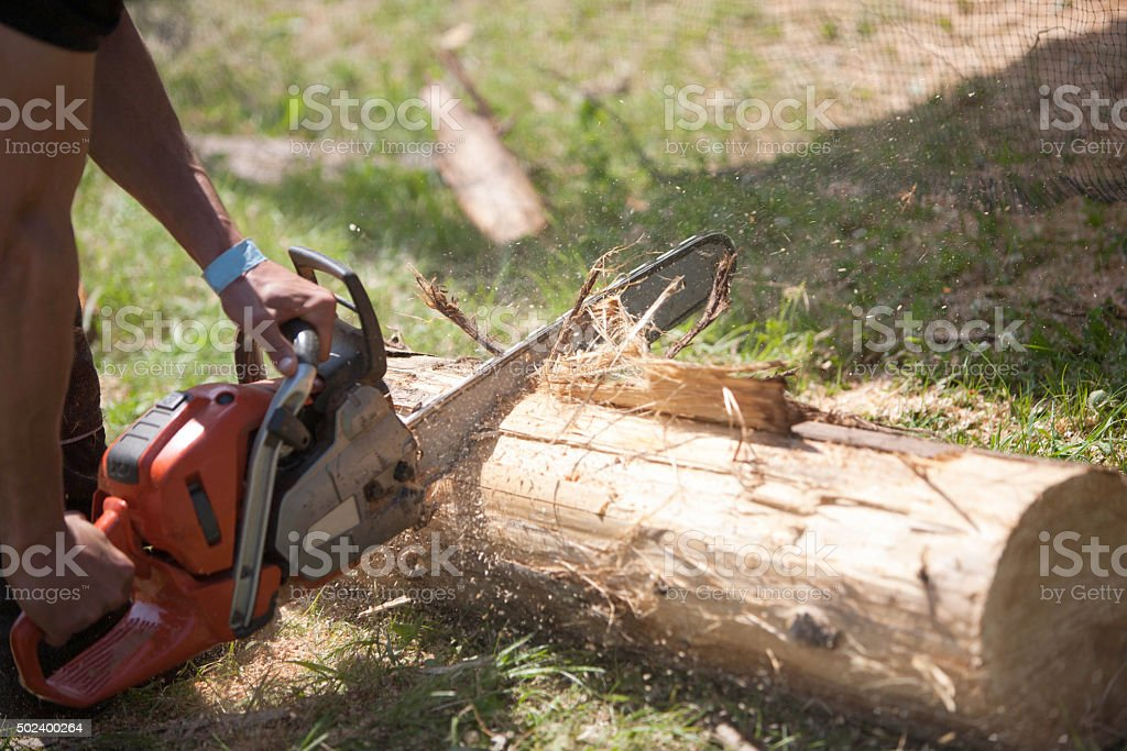 Tree surgeon ripping through a large wooden log stock photo