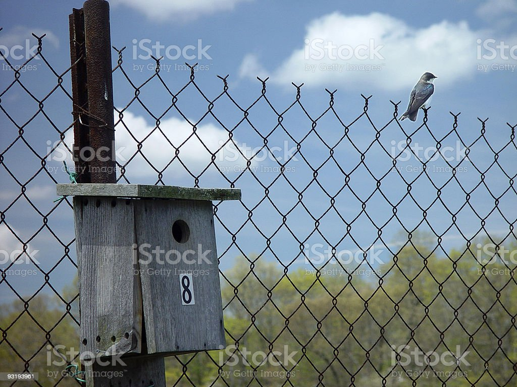 Tree Swallow (?) and House royalty-free stock photo
