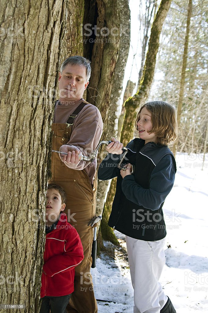 tree tapping stock photo