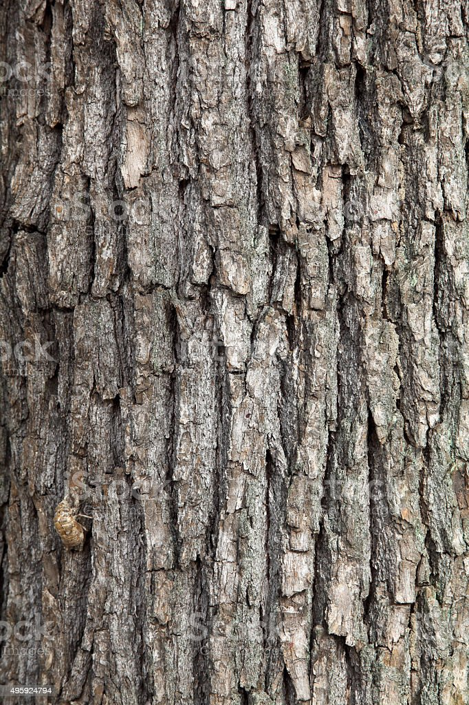 tree texture background stock photo
