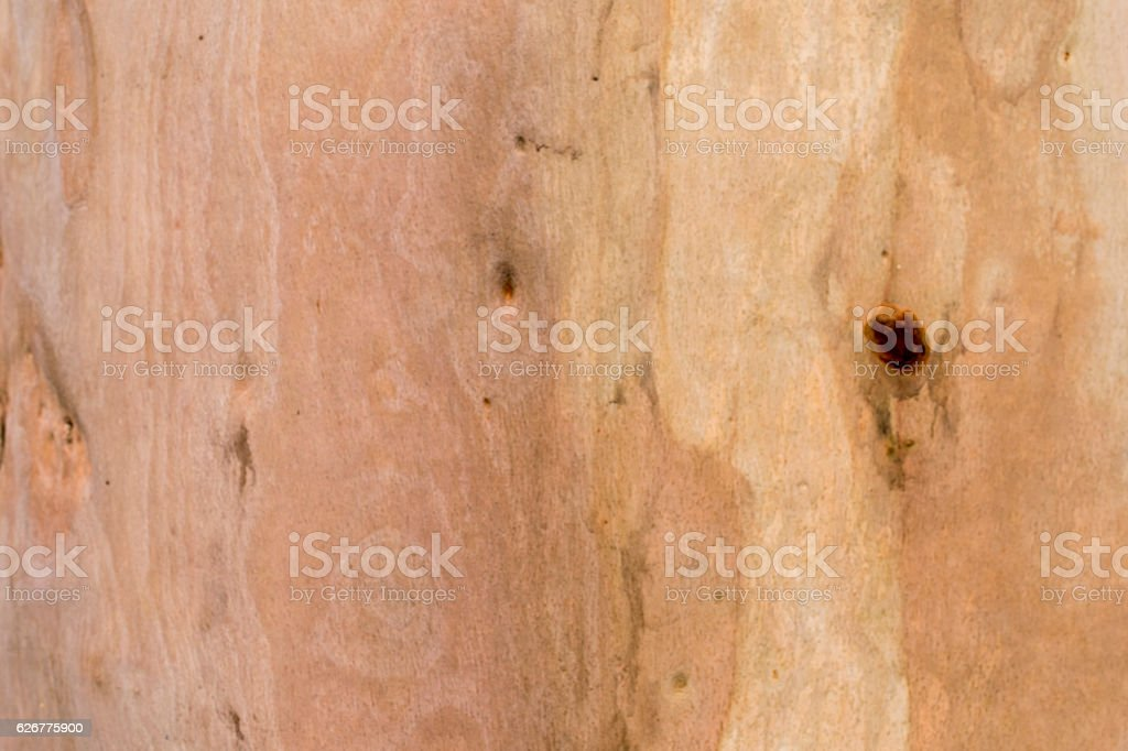 Tree texture bark wood background stock photo