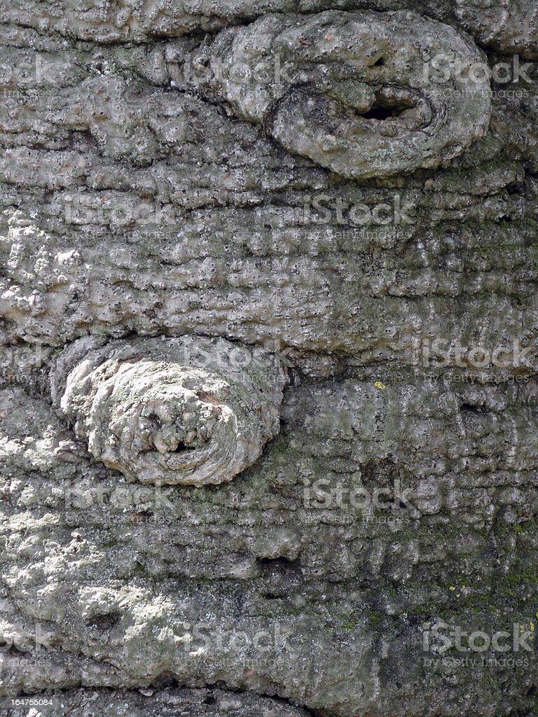 tree texture close-up royalty-free stock photo
