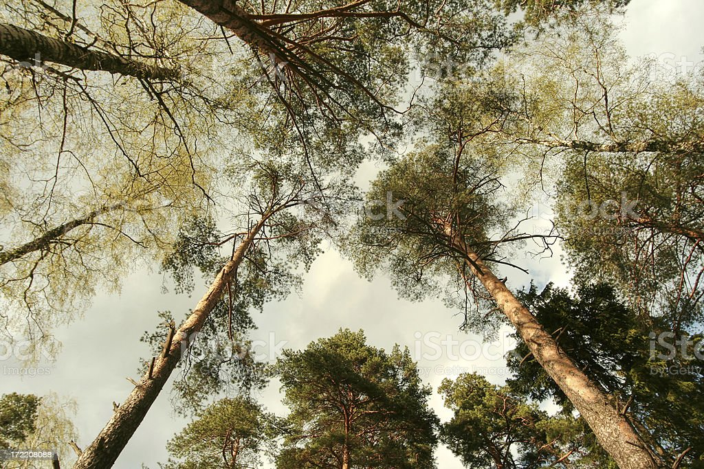 Tree texture. royalty-free stock photo