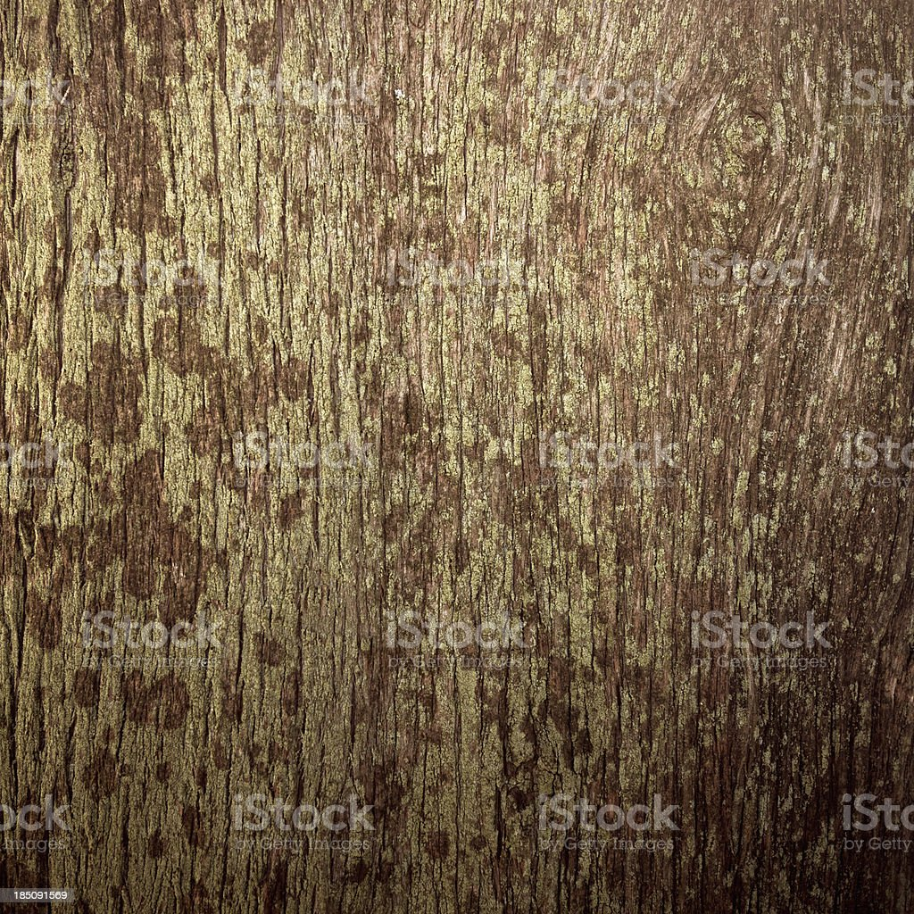 Tree texture royalty-free stock photo