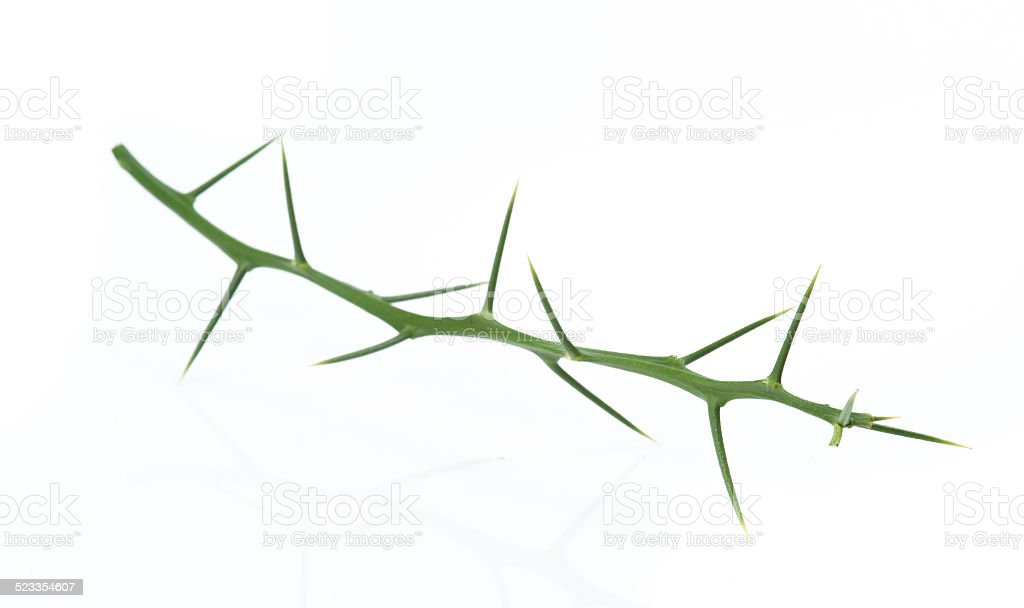 Tree thorns stock photo