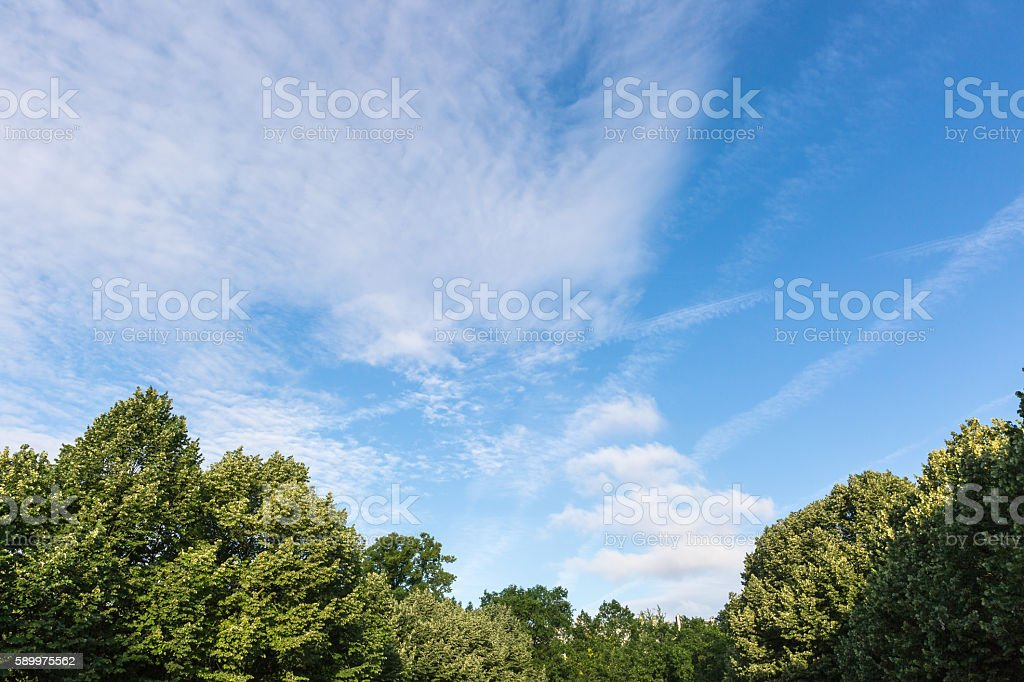 tree top and cloudscape stock photo