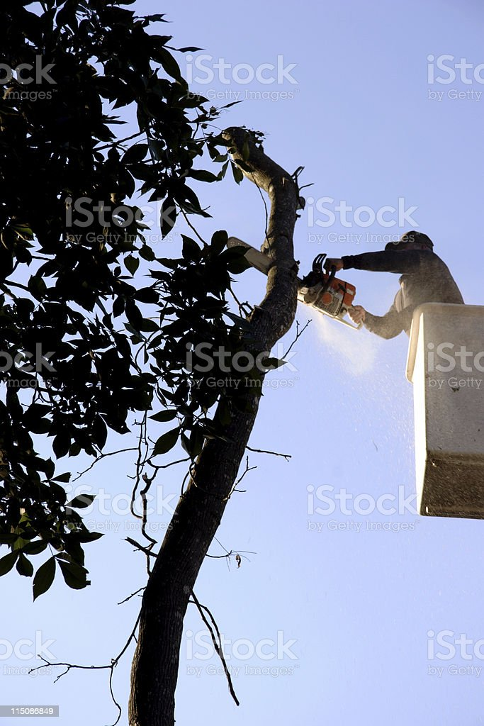 tree top trimmer (removal series) stock photo