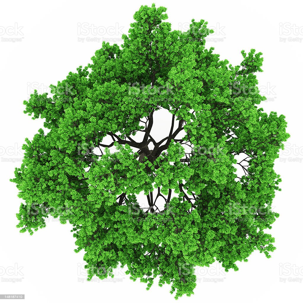 tree top view in 100Mpix stock photo