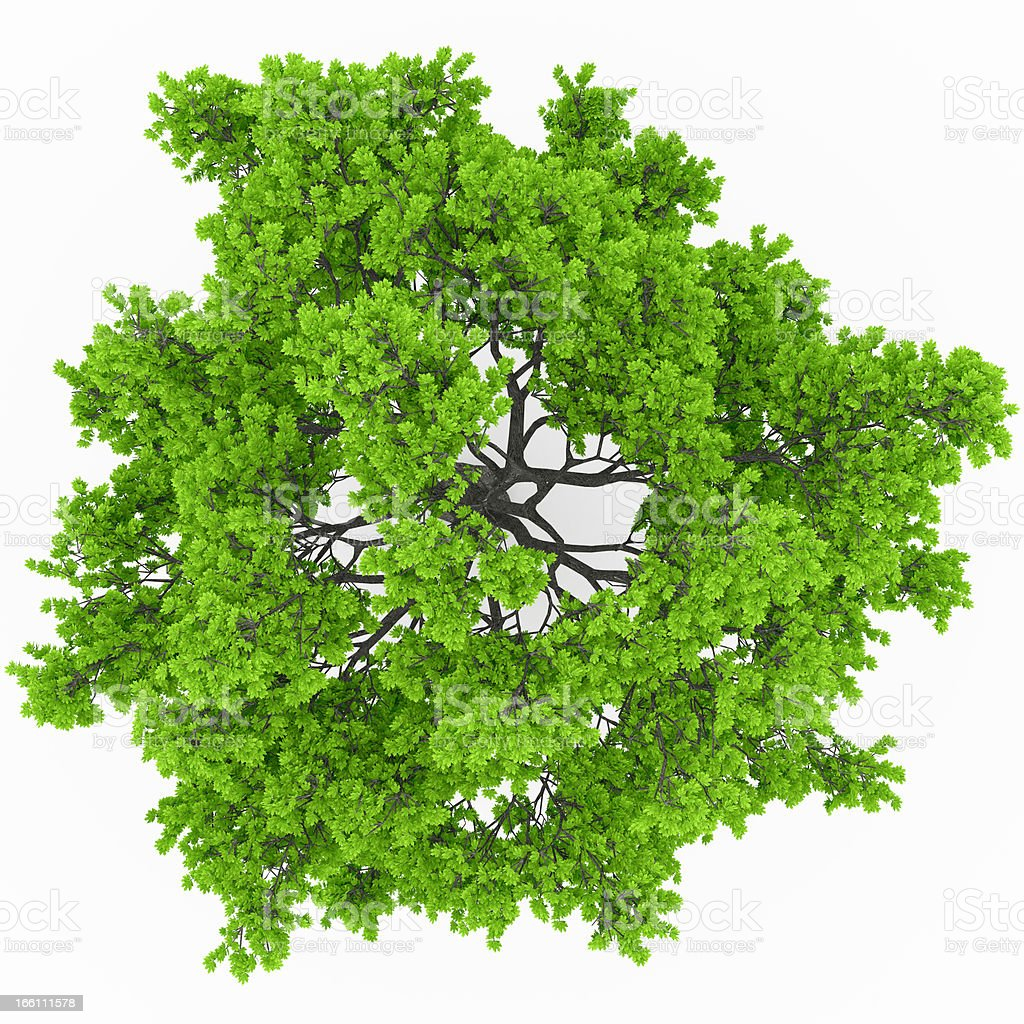 Trees Top View Pictures Images And Stock Photos Istock