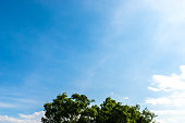 Tree top with clouds in blue sky background