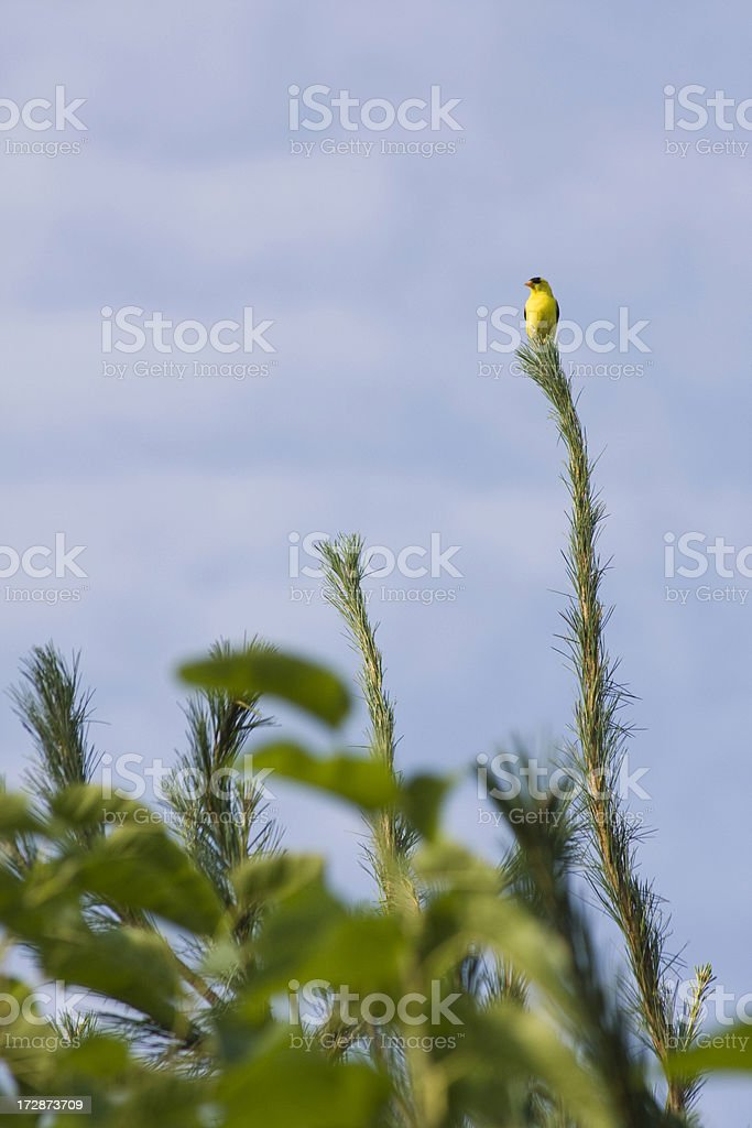 Tree Topper stock photo