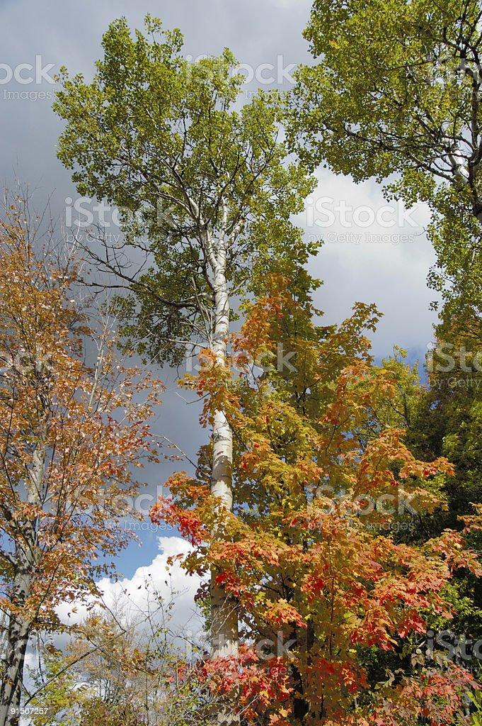Tree tops against sky royalty-free stock photo