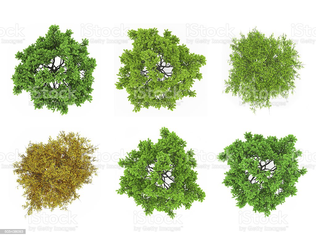 Tree tops isolated stock photo