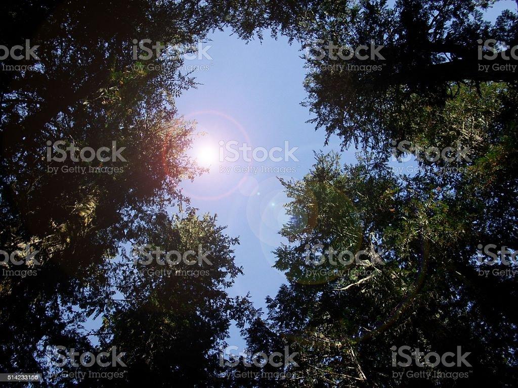 Tree tops to sky - abstract art stock photo