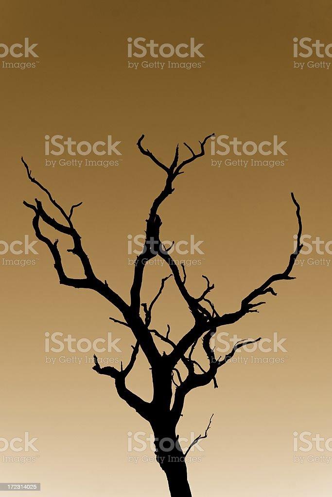 Tree torso royalty-free stock photo