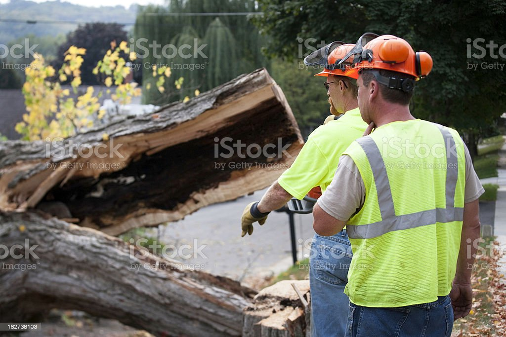 Tree Trimmers or Construction Workers royalty-free stock photo
